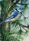 Blue Jay (Large Pieces) (RB13563-9), a 300 piece Ravensburger jigsaw puzzle.