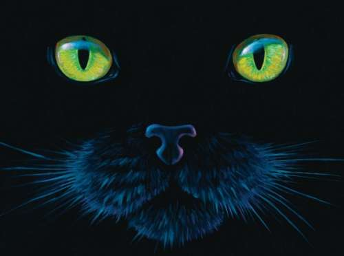 Black Cat (SUN63346), a 1000 piece jigsaw puzzle by Sunsout. Click to view larger image.
