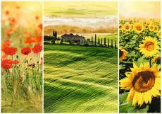 Sunny Tuscany. Click to view this product