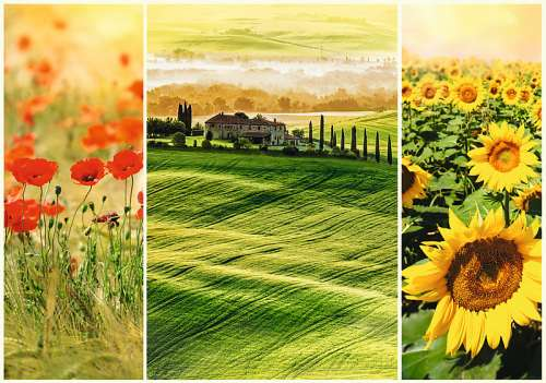 Sunny Tuscany (TRE10410), a 1000 piece jigsaw puzzle by Trefl. Click to view larger image.