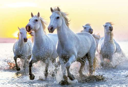 White Horses at Sunset (EDU17105), a 1000 piece jigsaw puzzle by Educa. Click to view larger image.