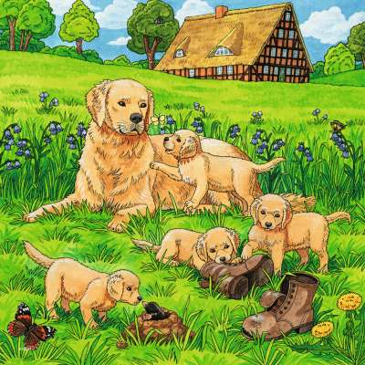 Cats And Dogs (3 x 49pc) (RB08002-1), a 49 piece jigsaw puzzle by Ravensburger. Click to view larger image.