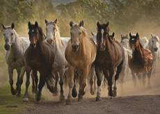 Team of Horses. Click to view this product