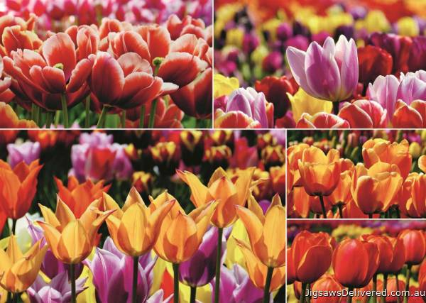Dutch Tulips, Holland (JUM18364), a 1000 piece jigsaw puzzle by Jumbo.