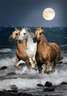Running Horses. Click to view this product