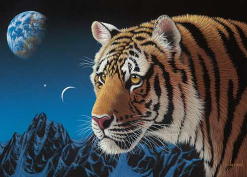 Tiger Night (Wild at Heart) (HOL098705), a 1000 piece jigsaw puzzle by Holdson. Click to view larger image.