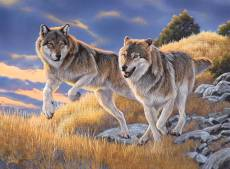 The Wolves (CLE 35033), a 500 piece Clementoni jigsaw puzzle.