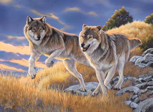 The Wolves (CLE 35033), a 500 piece jigsaw puzzle by Clementoni. Click to view larger image.