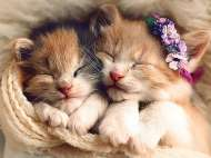 Sleeping Kittens (TRE37271), a 500 piece Trefl jigsaw puzzle.