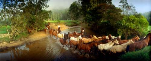 Round-Up, Glenworth Valley (CAA81912), a 1000 piece jigsaw puzzle by Crown and Andrews. Click to view larger image.