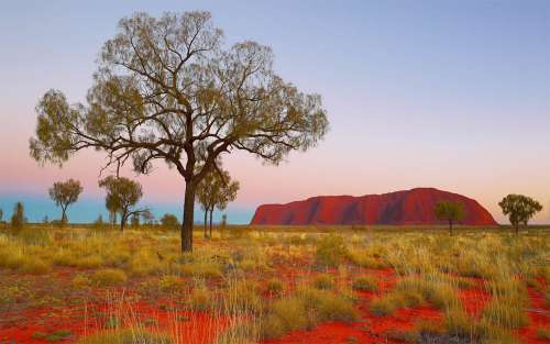 Red Centre Dreaming, Uluru (CAA07751), a 2000 piece jigsaw puzzle by Crown and Andrews. Click to view larger image.