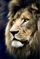 Lion's Portrait. Click to view this product