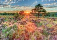 Heather at Sunset (JUM18524), a 500 piece jigsaw puzzle by Jumbo. Click to view this jigsaw puzzle.