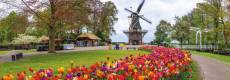 Windmill at Keukenhof, Netherlands (Panoramic) (JUM18517), a 1000 piece Jumbo jigsaw puzzle.