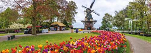 Windmill at Keukenhof, Netherlands (Panoramic) (JUM18517), a 1000 piece jigsaw puzzle by Jumbo. Click to view larger image.