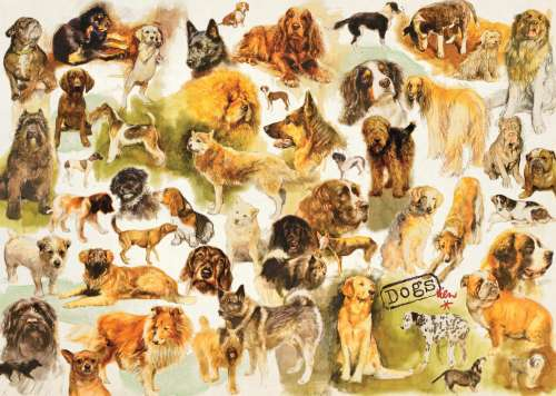 Dog Breeds (JUM18596), a 1000 piece jigsaw puzzle by Jumbo. Click to view larger image.
