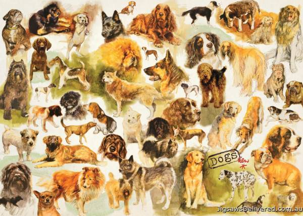 Dog Breeds (JUM18596), a 1000 piece jigsaw puzzle by Jumbo.