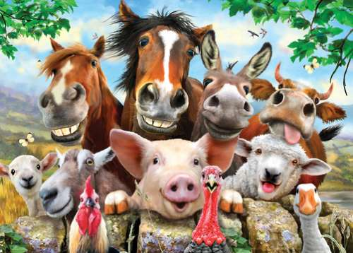 Farm Frolics (Selfies) (HOL770656), a 500 piece jigsaw puzzle by Holdson. Click to view larger image.