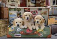 Puppies in the Luggage (EDU17645), a 500 piece Educa jigsaw puzzle.