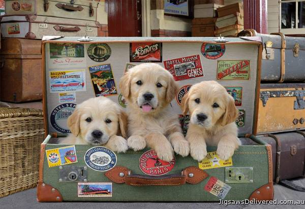 Puppies in the Luggage (EDU17645), a 500 piece jigsaw puzzle by Educa.
