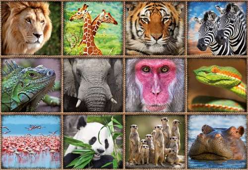 Wildlife Collage (EDU17656), a 1000 piece jigsaw puzzle by Educa. Click to view larger image.
