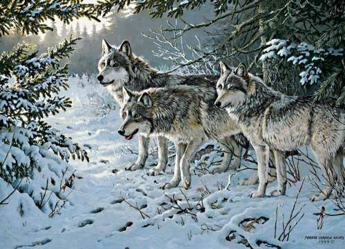 Wolf Trail (COB80071), a 1000 piece jigsaw puzzle by Cobble Hill. Click to view larger image.