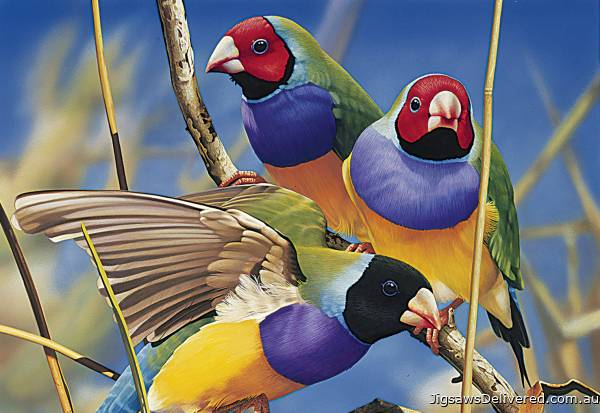 Gouldian Finches (Australian Geographic) (BL02009), a 1000 piece jigsaw puzzle by Blue Opal.