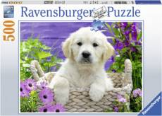 Sweet Golden Retriever. Click to view this product
