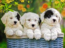 Cuddly Puppies. Click to view this product