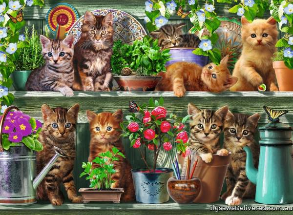Cats on the Shelf (RB14824-0), a 500 piece jigsaw puzzle by Ravensburger.