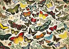 Butterflies. Click to view this product