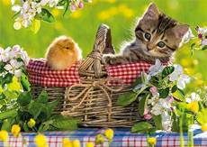Ready for a Picnic. Click to view this product