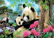 Morning Panda. Click to view this product