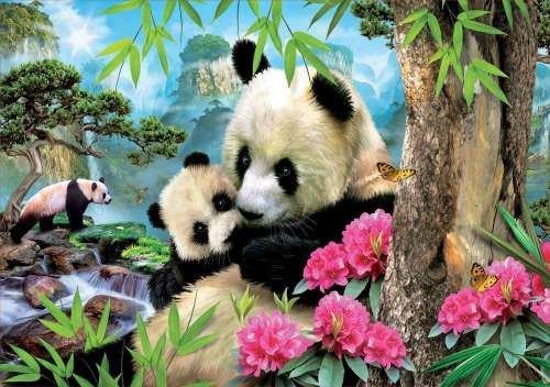 Morning Panda (EDU17995), a 1000 piece jigsaw puzzle by Educa. Click to view larger image.