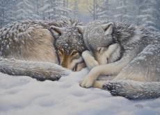 Wolves Winter Repose. Click to view this product