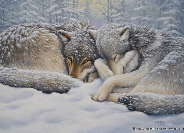 Wolves Winter Repose (COB80190), a 1000 piece jigsaw puzzle by Cobble Hill.