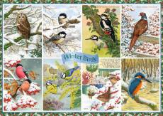 Winter Birds. Click to view this product