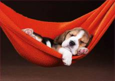 Puppy Sleeping in the Hammock (EDU18477), a 500 piece Educa jigsaw puzzle.