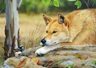 Dingo's Little Sidekick (All Creatures Great and Small) (HOL773053), a 1000 piece jigsaw puzzle by HoldsonArtist Natalie Jane Parker. Click to view this jigsaw puzzle.