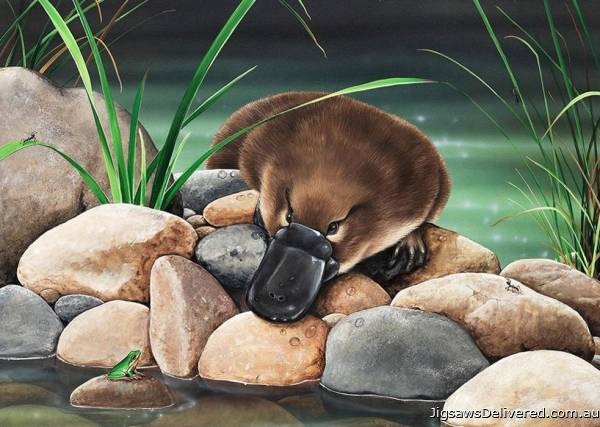 Platypus - River Companions (All Creatures Great and Small) (HOL773046), a 1000 piece jigsaw puzzle by Holdson.