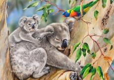 Koalas - Making New Friends (All Creatures Great and Small) (HOL773039), a 1000 piece Holdson jigsaw puzzle.