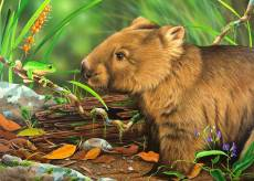 Wombat - The Forest .... Click to view this product