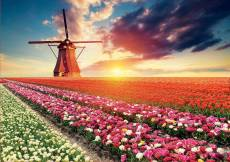 Tulip Fields, Holland. Click to view this product