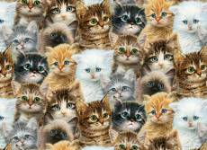 Kitten Collage. Click to view this product