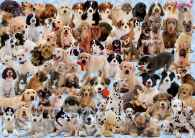 Dogs Collage (RB15633-7), a 1000 piece jigsaw puzzle by Ravensburger. Click to view this jigsaw puzzle.