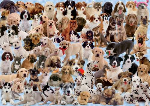 Dogs Collage (RB15633-7), a 1000 piece jigsaw puzzle by Ravensburger. Click to view larger image.