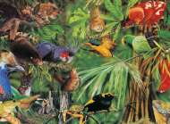 Rainforest (Wild Australia Educational Series) (BL01876), a 300 piece Blue Opal jigsaw puzzle.