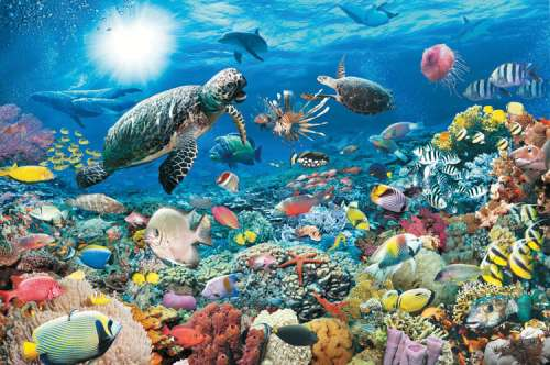 Underwater Tranquility (RB17426-3), a 5000 piece jigsaw puzzle by Ravensburger. Click to view larger image.