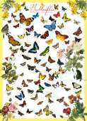 Butterflies of the World (EUR60077), a 1000 piece Eurographics jigsaw puzzle.