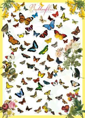 Butterflies of the World (EUR60077), a 1000 piece jigsaw puzzle by Eurographics. Click to view larger image.